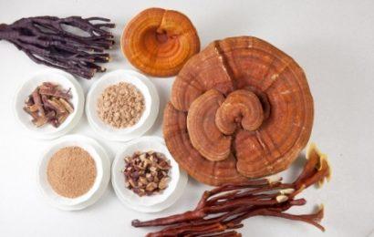 Thực tế về tác dụng của nấm linh chi
