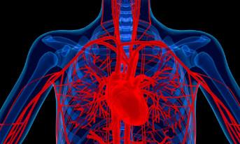 Thiếu sắt có thể làm tăng nguy cơ mắc bệnh tim