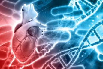 Phát hiện loại gen có thể loại bỏ cholesterol ngăn ngừa bệnh tim