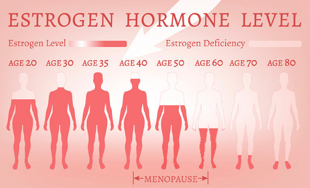 estrogen-hormone-level